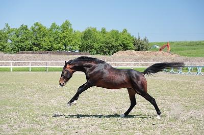 手をかけて良い馬を育てたい