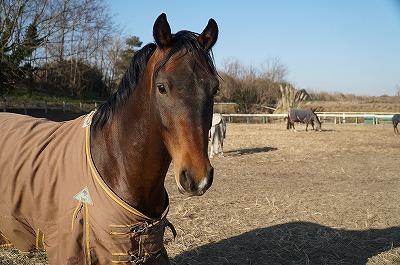 馬の容姿には人間の愛情が表れる