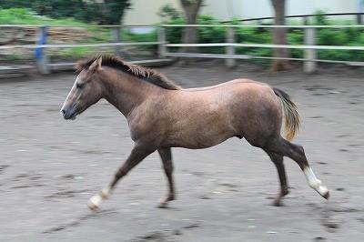 風の中を走る馬