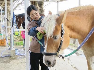 体験乗馬で馬のお手入れ