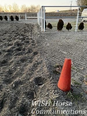 乗馬の蹄と蹄跡