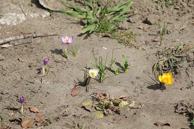 ひそやかな春の訪れ