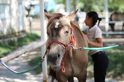 馬に快適を提供する
