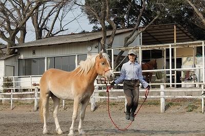 馬のすぐ横で縄跳び