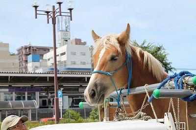 乗馬クラブの送迎は我孫子市天王台駅からです