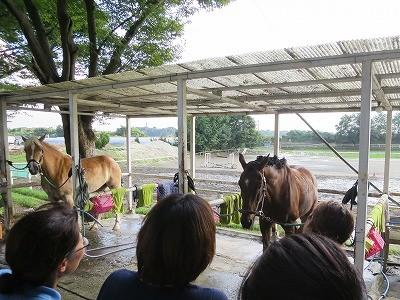 楽しい馬との生活