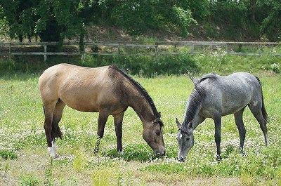 馬好きにはたまらない風景