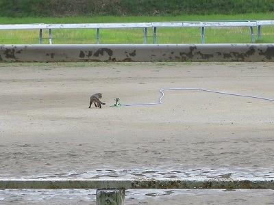 馬とコミュニケーション