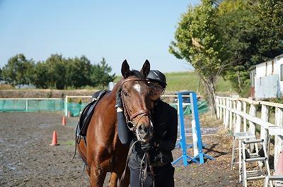 馬も愛情をわかってる