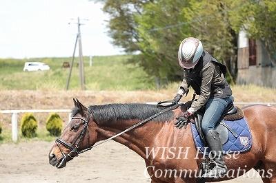 一体感を感じる乗馬