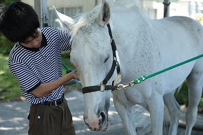 馬の手入れ講習会