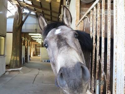 人が好き。信頼している馬