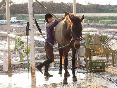 馬が好き乗馬が好き