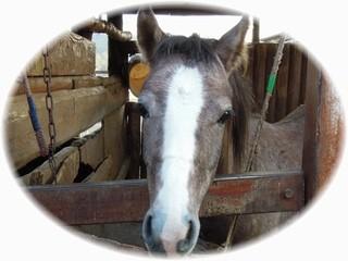 体験乗馬お待ちしています♪