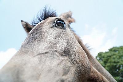馬の瞳が曇らぬように