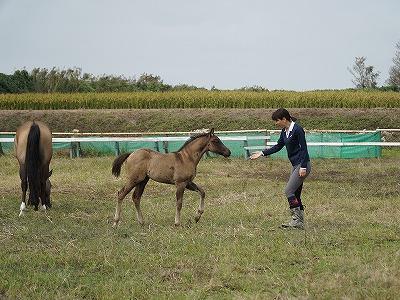 馬とあいさつ