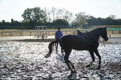 信念に基づいた馬作り