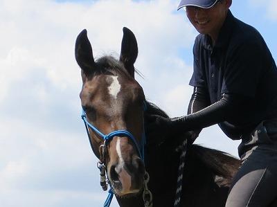 うっとりした馬の表情