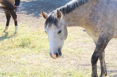 性格が良い馬の可愛い表情