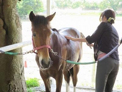 新馬調教 癒しの時間を作る