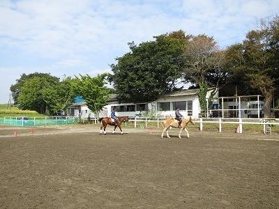 乗馬ですごす馬との一日