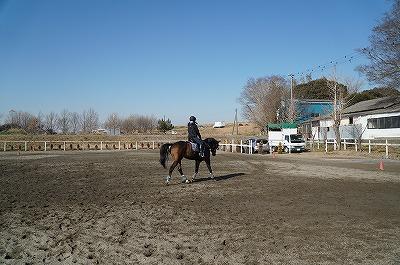 馬に優しく王道で