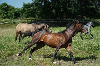 馬は本当に美しい