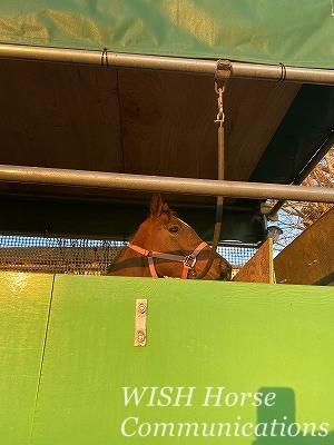 乗馬の馬運車教育