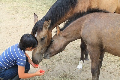 馬とスイカ