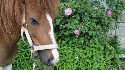 馬ってほんとに可愛いね