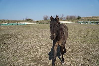 馬も周りから学習している