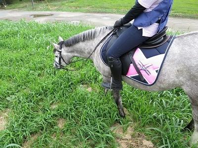 愛情乗馬が大好き