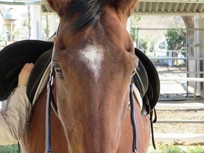馬のきれいな瞳