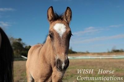 馬の信頼を得る
