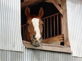 馬の癒され顔