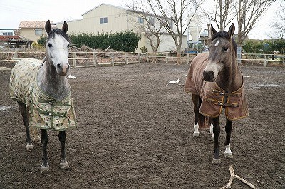 表情豊かな馬達
