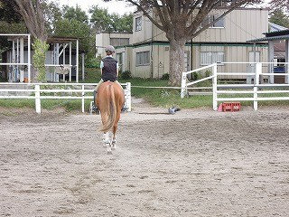 馬と遊ぶ鳥と遊ぶ?