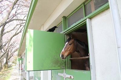 馬事公苑ではカラスに気をつけて