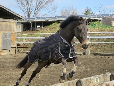 のびのび遊ぶ馬