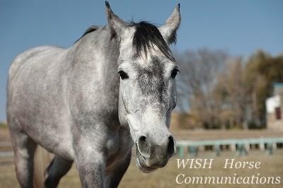 馬とのふれあいを大切にする乗馬