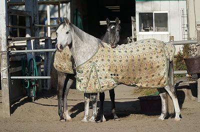 仔馬を一緒に育てたい