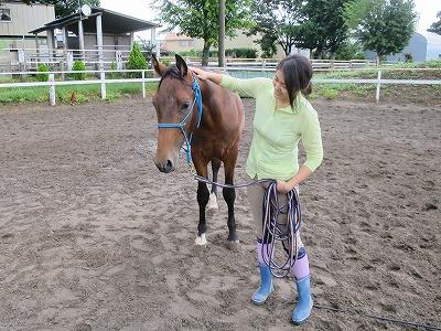 馬とグランドワーク練習風景