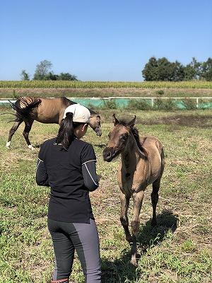 馬と心のつながり