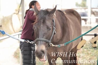 可愛い馬の表情