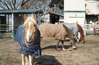 馬達の遊び