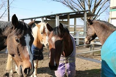 馬の人工授精