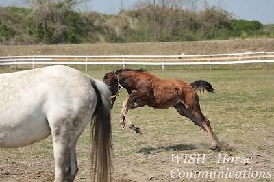 乗馬の子馬