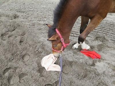 新馬調教 馬を安心させる