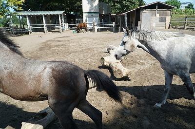 馬は放牧して当たり前