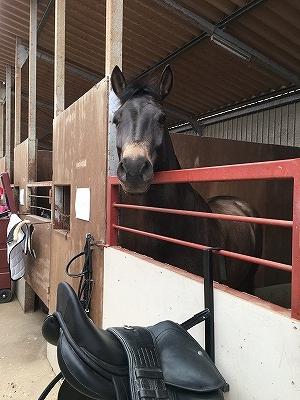 馬はあなたが乗ることをどう思っている?